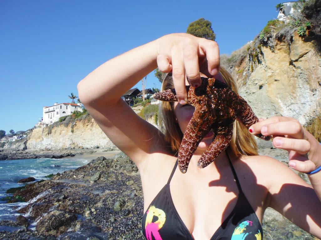 starfish in laguna beach